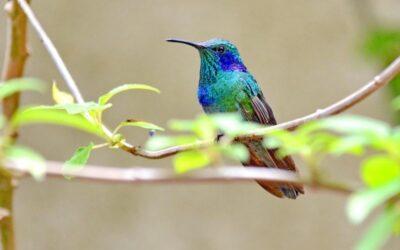 De kleine kolibrie, groot in persoonlijk leiderschap